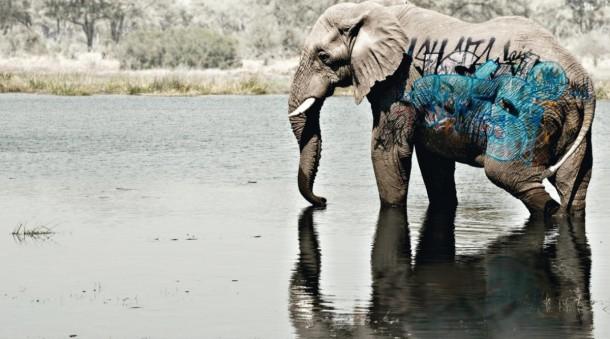 graffiti-elephant